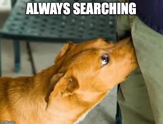 ALWAYS SEARCHING | made w/ Imgflip meme maker