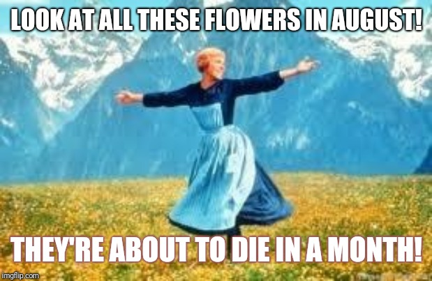 Look At All These | LOOK AT ALL THESE FLOWERS IN AUGUST! THEY'RE ABOUT TO DIE IN A MONTH! | image tagged in memes,look at all these | made w/ Imgflip meme maker