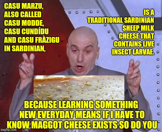 It Is, However, Illegal In The United States | CASU MARZU, ALSO CALLED CASU MODDE, CASU CUNDÍDU AND CASU FRÀZIGU IN SARDINIAN, IS A TRADITIONAL SARDINIAN SHEEP MILK CHEESE THAT CONTAINS L | image tagged in memes,dr evil laser,ewwww,eww,grossed out,gross | made w/ Imgflip meme maker