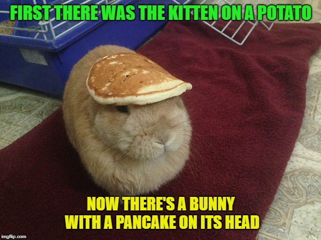 If this meme is successful, I give up. Your move Boma :) |  FIRST THERE WAS THE KITTEN ON A POTATO; NOW THERE'S A BUNNY WITH A PANCAKE ON ITS HEAD | image tagged in bunny,pancake,cute | made w/ Imgflip meme maker