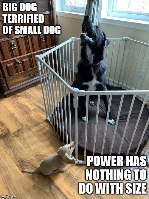 BIG DOG TERRIFIED OF SMALL DOG POWER HAS NOTHING TO DO WITH SIZE | image tagged in reed family pets | made w/ Imgflip meme maker