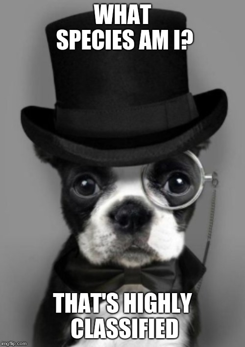 WHAT SPECIES AM I? THAT'S HIGHLY CLASSIFIED | image tagged in dog with top hat | made w/ Imgflip meme maker