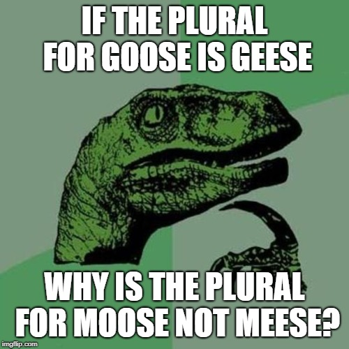 Meese o stupid | IF THE PLURAL FOR GOOSE IS GEESE WHY IS THE PLURAL FOR MOOSE NOT MEESE? | image tagged in raptor,goose,geese,moose,language,meese o stupid | made w/ Imgflip meme maker