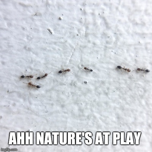 AHH NATURE'S AT PLAY | image tagged in ants | made w/ Imgflip meme maker
