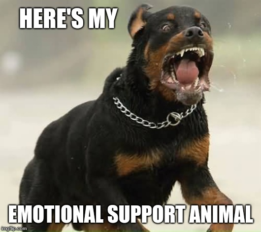 Esa Emotional Support Rottie Heres My Emotional Support Animal Image Tagged In Emotional Support Animal Imgflip Rottweiler Memes Gifs Imgflip