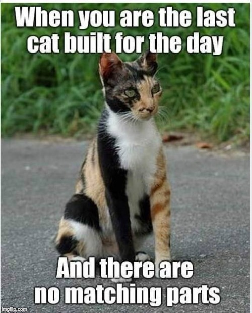 image tagged in cat,build,parts | made w/ Imgflip meme maker