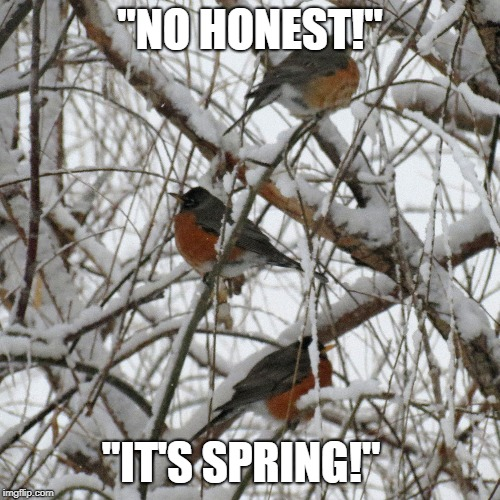 "Gas Lighting Robins | ""NO HONEST!"" ""IT'S SPRING!"" 