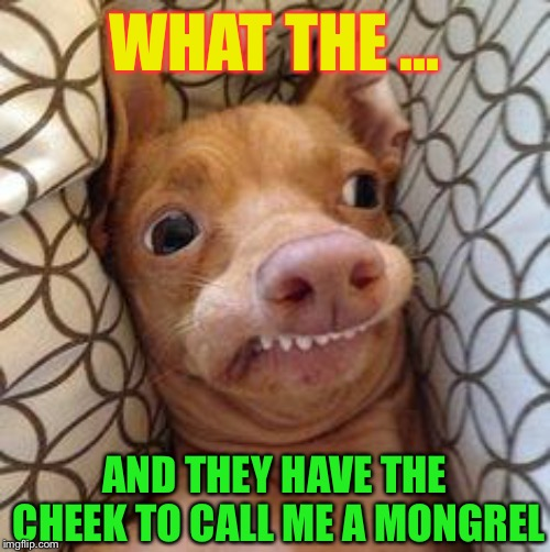 Ph dog | WHAT THE ... AND THEY HAVE THE CHEEK TO CALL ME A MONGREL | image tagged in ph dog | made w/ Imgflip meme maker