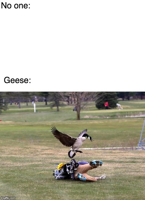 No one: Geese: | image tagged in geese | made w/ Imgflip meme maker
