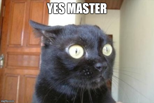 Cannot Be Unseen Cat | YES MASTER | image tagged in cannot be unseen cat | made w/ Imgflip meme maker