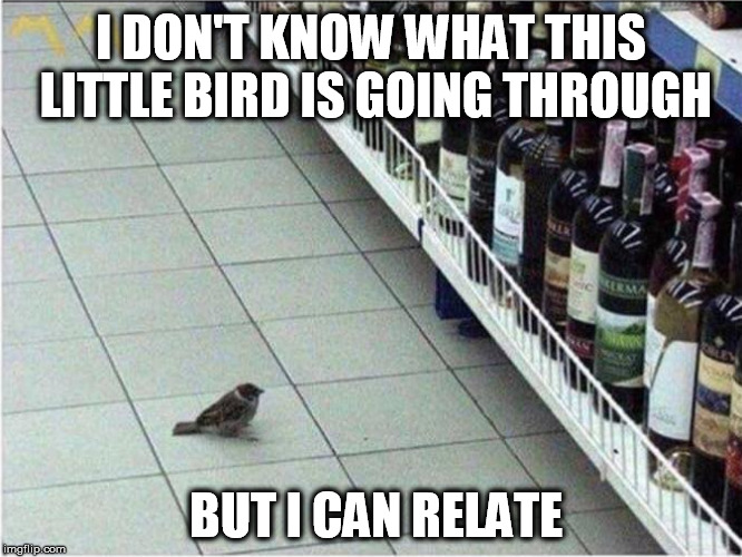 I CAN RELATE | I DON'T KNOW WHAT THIS LITTLE BIRD IS GOING THROUGH BUT I CAN RELATE | image tagged in birdy,booze,icanrelate,funny,choices | made w/ Imgflip meme maker