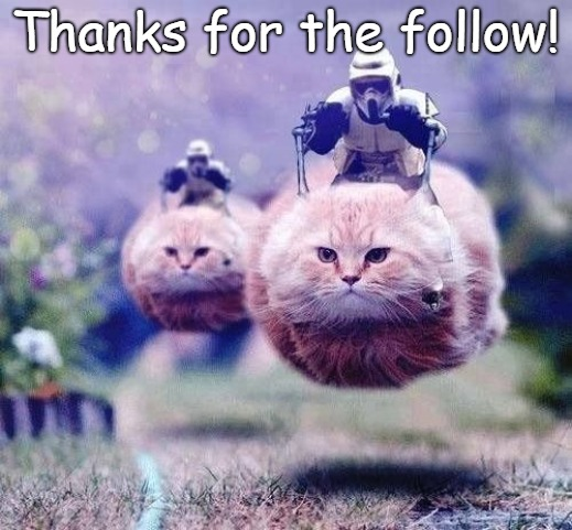Thanks for the follow! | Thanks for the follow! | image tagged in star wars memes,thanks,funny cats,followers,follow | made w/ Imgflip meme maker