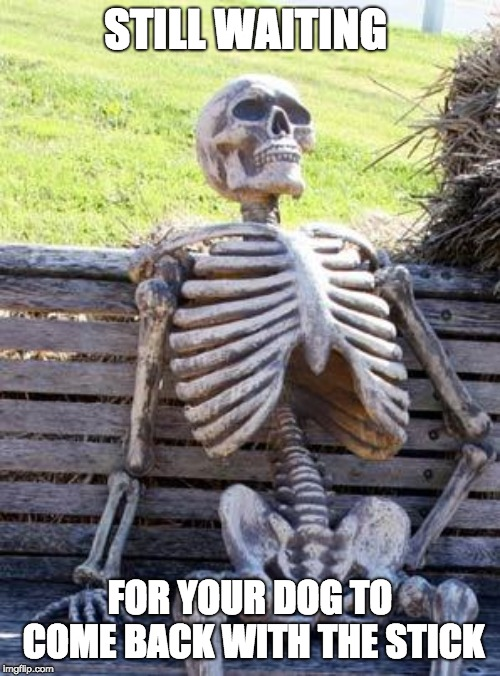 Waiting Skeleton | STILL WAITING FOR YOUR DOG TO COME BACK WITH THE STICK | image tagged in memes,waiting skeleton | made w/ Imgflip meme maker