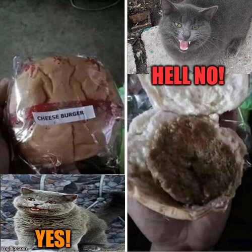 Someone will pay for this travesty! | YES! HELL NO! | image tagged in i can has cheezburger cat,cheese,disappointment,memes,funny | made w/ Imgflip meme maker
