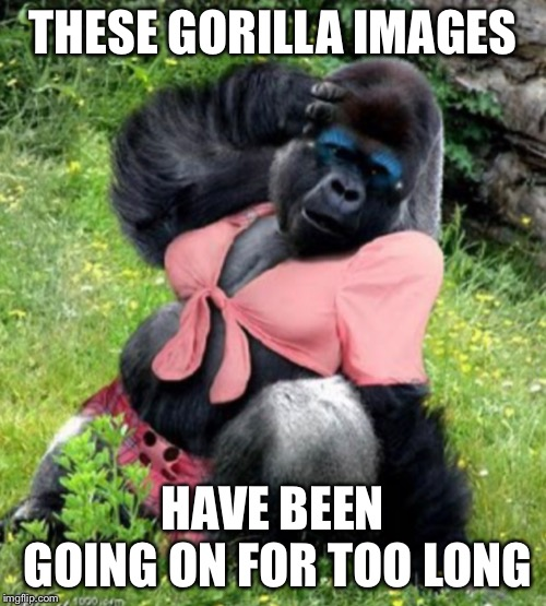 Makeup time | THESE GORILLA IMAGES HAVE BEEN GOING ON FOR TOO LONG | image tagged in gorilla,lady,memes | made w/ Imgflip meme maker