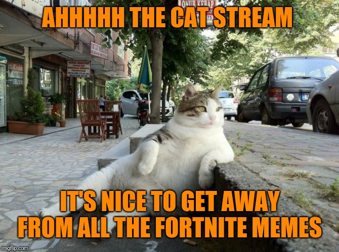 I love the cat stream. And there is a lot less spam  | AHHHHH THE CAT STREAM IT'S NICE TO GET AWAY FROM ALL THE FORTNITE MEMES | image tagged in cat relaxing,cats,sit back and relax,wonderful wonderful stream,why can't it all be like this,memes | made w/ Imgflip meme maker