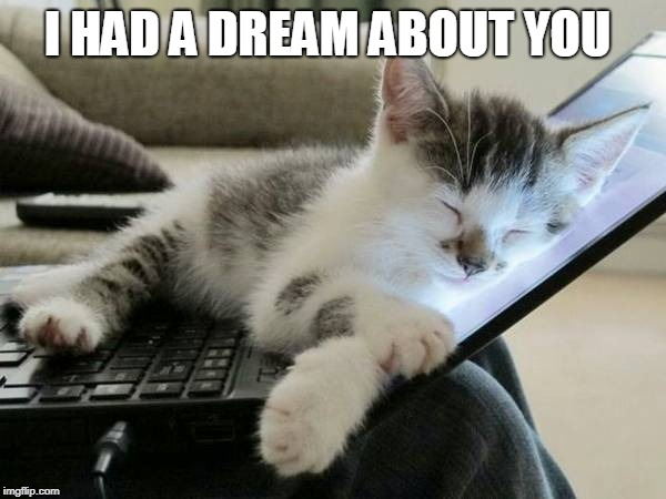cat sleep computer | I HAD A DREAM ABOUT YOU | image tagged in cat sleep computer | made w/ Imgflip meme maker