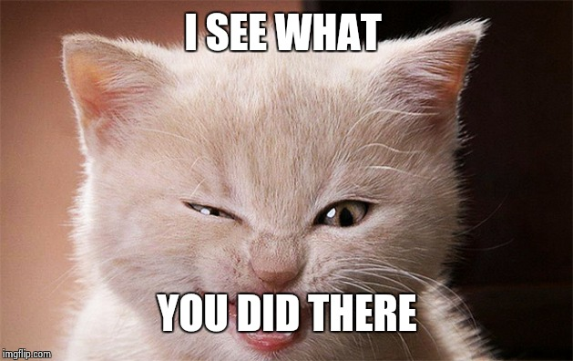 Laughing Cat | I SEE WHAT YOU DID THERE | image tagged in laughing cat | made w/ Imgflip meme maker