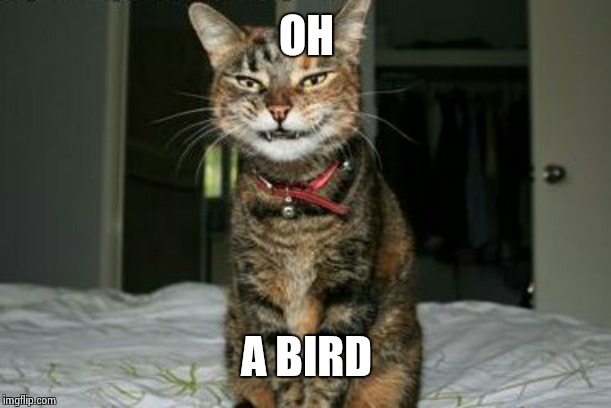 Evil Smile Cat | OH A BIRD | image tagged in evil smile cat | made w/ Imgflip meme maker
