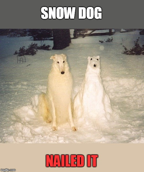 snow dog | SNOW DOG NAILED IT | image tagged in snow | made w/ Imgflip meme maker
