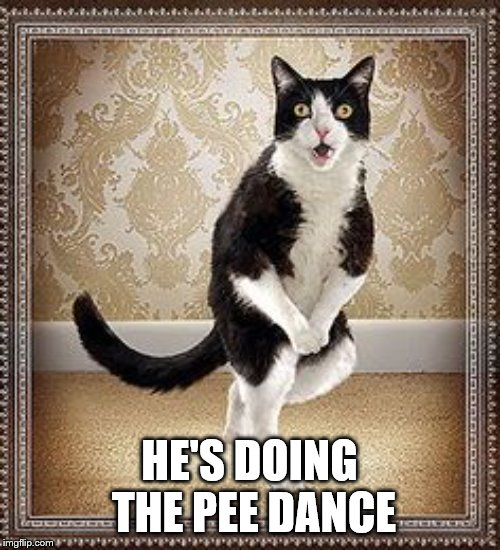 cat pee pee dance | HE'S DOING THE PEE DANCE | image tagged in cat pee pee dance | made w/ Imgflip meme maker