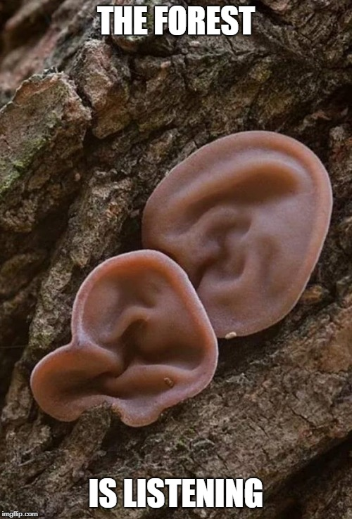 TREE EARS | THE FOREST IS LISTENING | image tagged in tree,forest,mushroom | made w/ Imgflip meme maker