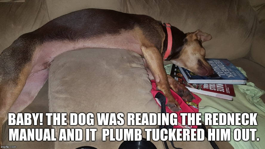 It is his favorite book | BABY! THE DOG WAS READING THE REDNECK MANUAL AND IT  PLUMB TUCKERED HIM OUT. | image tagged in sleeping dog,redneck manual,reading dog,favorite book | made w/ Imgflip meme maker
