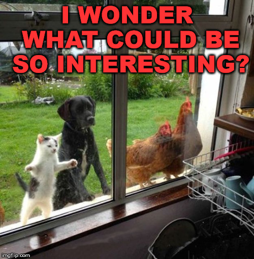 Do you have an idea what they are looking at? | I WONDER WHAT COULD BE SO INTERESTING? | image tagged in meme,interesting,what are you looking at,i have no idea,funny,farm animals | made w/ Imgflip meme maker