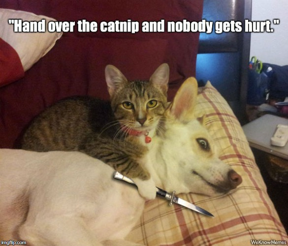 """Catnip"" 