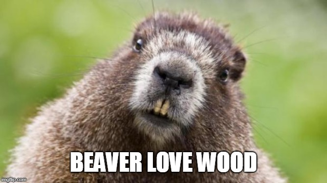 Mr Beaver | BEAVER LOVE WOOD | image tagged in mr beaver | made w/ Imgflip meme maker