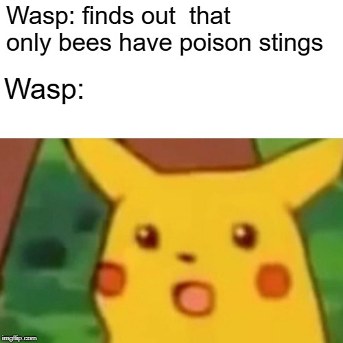 Wasp: finds out  that only bees have poison stings Wasp: | image tagged in memes,surprised pikachu | made w/ Imgflip meme maker