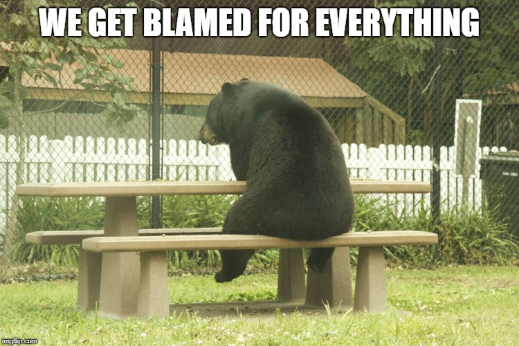 Sad Bear | WE GET BLAMED FOR EVERYTHING | image tagged in sad bear | made w/ Imgflip meme maker