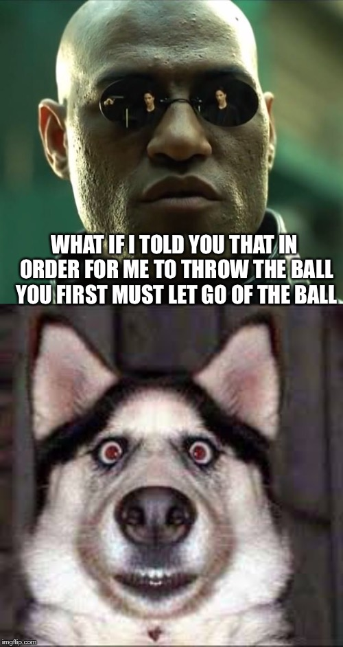Somebody needs to send out a doggo memo |  WHAT IF I TOLD YOU THAT IN ORDER FOR ME TO THROW THE BALL YOU FIRST MUST LET GO OF THE BALL | image tagged in morpheus,throw the damn ball | made w/ Imgflip meme maker