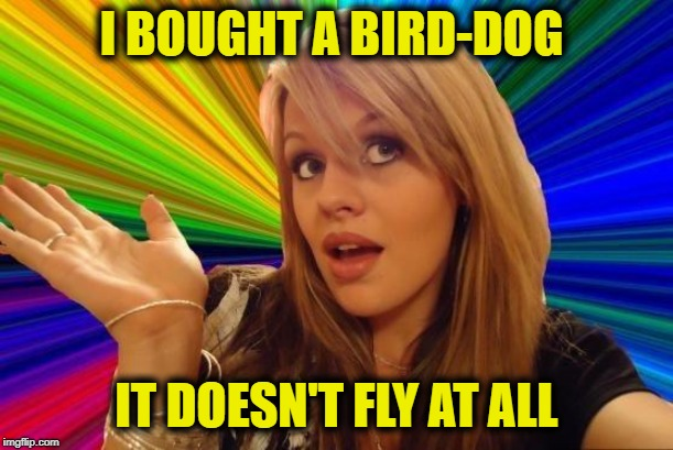 Dumb Blonde | I BOUGHT A BIRD-DOG IT DOESN'T FLY AT ALL | image tagged in memes,dumb blonde,dog,funny memes,stupid | made w/ Imgflip meme maker