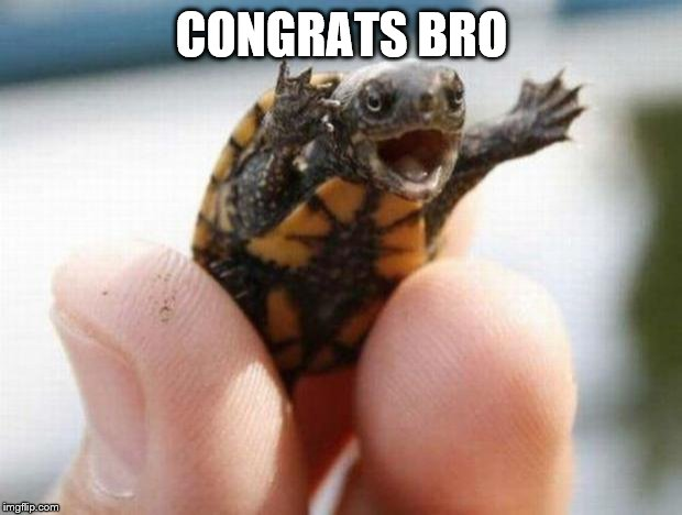 happy baby turtle | CONGRATS BRO | image tagged in happy baby turtle | made w/ Imgflip meme maker