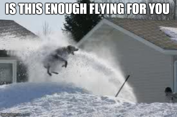 Flying dog | IS THIS ENOUGH FLYING FOR YOU | image tagged in flying dog | made w/ Imgflip meme maker