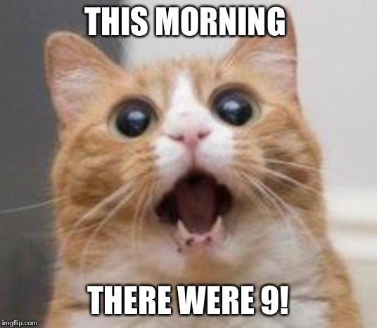 Wow | THIS MORNING THERE WERE 9! | image tagged in wow | made w/ Imgflip meme maker