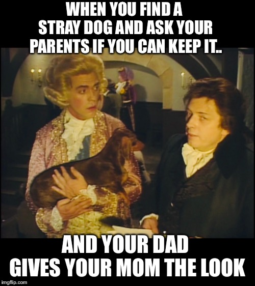 Shall we? | WHEN YOU FIND A STRAY DOG AND ASK YOUR PARENTS IF YOU CAN KEEP IT.. AND YOUR DAD GIVES YOUR MOM THE LOOK | image tagged in memes,uk_comedy_gold,blackadder,puppy,please,mum | made w/ Imgflip meme maker