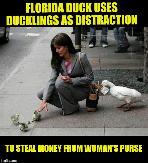 Florida Man Week 3/3 to 3/10 A Claybourne and Triumph_9 Event | FLORIDA DUCK USES DUCKLINGS AS DISTRACTION TO STEAL MONEY FROM WOMAN'S PURSE | image tagged in florida man week 3/3 to 3/10 a claybourne and triumph_9 event,florida duck | made w/ Imgflip meme maker