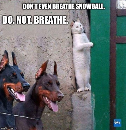 DON'T EVEN BREATHE SNOWBALL. DO. NOT. BREATHE. | image tagged in hiding cat | made w/ Imgflip meme maker