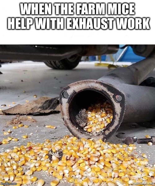 Farm mice  | WHEN THE FARM MICE HELP WITH EXHAUST WORK | image tagged in farm,mice,corn,funny | made w/ Imgflip meme maker