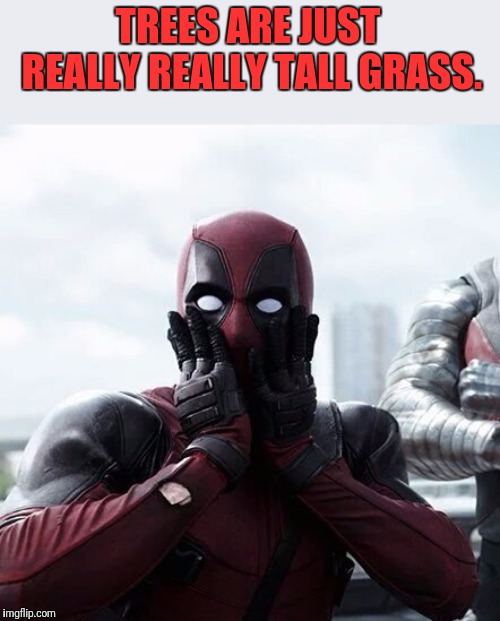 Deadpool Surprised | TREES ARE JUST REALLY REALLY TALL GRASS. | image tagged in memes,deadpool surprised,tall,grass | made w/ Imgflip meme maker