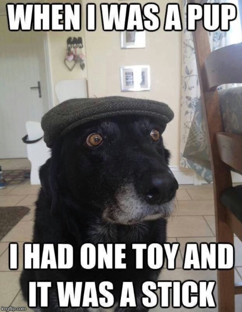 When i was a pup | image tagged in funny dogs | made w/ Imgflip meme maker