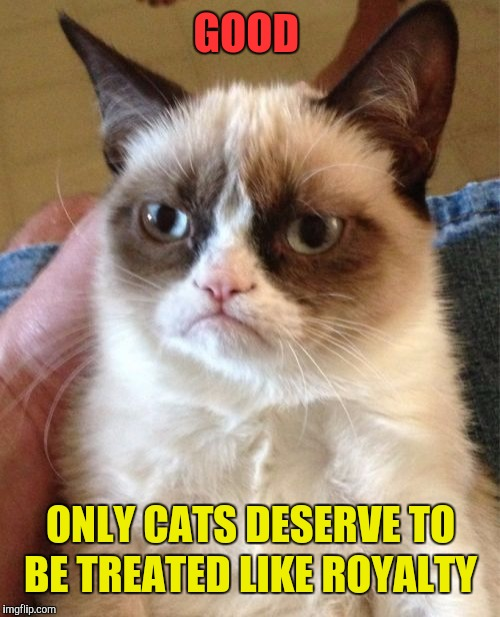 Grumpy Cat Meme | GOOD ONLY CATS DESERVE TO BE TREATED LIKE ROYALTY | image tagged in memes,grumpy cat | made w/ Imgflip meme maker