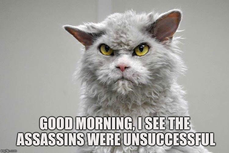 Bounty | GOOD MORNING, I SEE THE ASSASSINS WERE UNSUCCESSFUL | image tagged in cat,assassins,bounty,hit list,target,contract | made w/ Imgflip meme maker