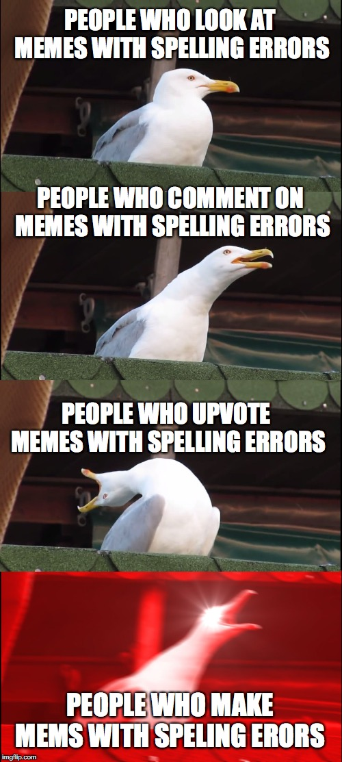 Speling Erorors  | PEOPLE WHO LOOK AT MEMES WITH SPELLING ERRORS PEOPLE WHO COMMENT ON MEMES WITH SPELLING ERRORS PEOPLE WHO UPVOTE MEMES WITH SPELLING ERRORS  | image tagged in memes,inhaling seagull,cats,funny,fun,cat | made w/ Imgflip meme maker