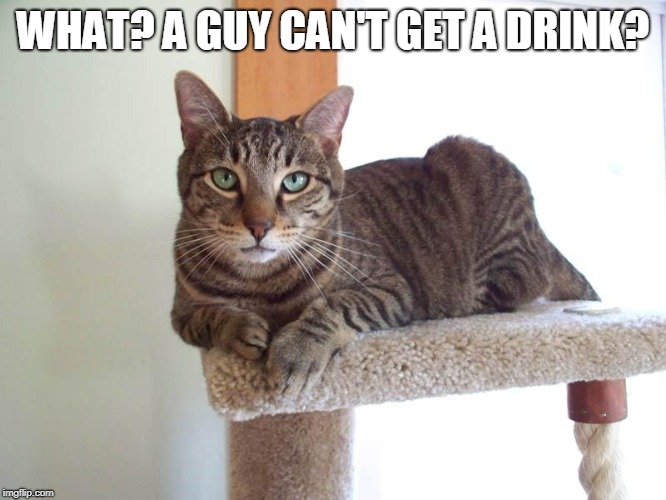 WHAT? A GUY CAN'T GET A DRINK? | made w/ Imgflip meme maker