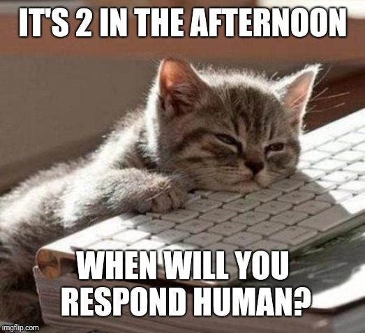 tired cat | IT'S 2 IN THE AFTERNOON WHEN WILL YOU RESPOND HUMAN? | image tagged in tired cat | made w/ Imgflip meme maker