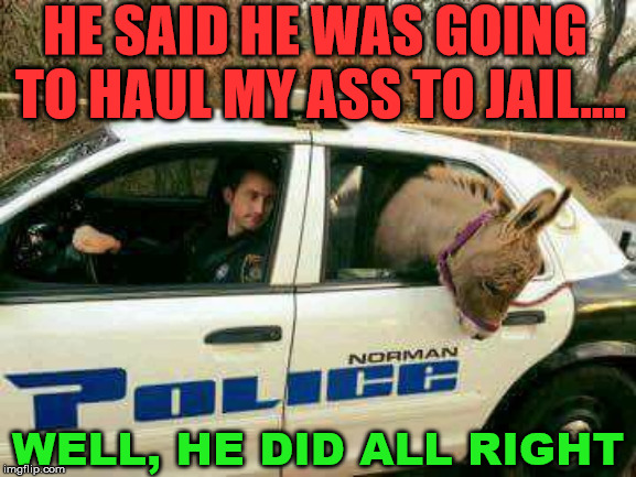 This not what I thought they would do. | HE SAID HE WAS GOING TO HAUL MY ASS TO JAIL.... WELL, HE DID ALL RIGHT | image tagged in donkey in police car,arrested,smartass,funny baby,jackass,sense of humor | made w/ Imgflip meme maker