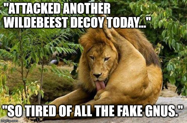 "Just Lion Around | ""ATTACKED ANOTHER WILDEBEEST DECOY TODAY..."" ""SO TIRED OF ALL THE FAKE GNUS."" 
